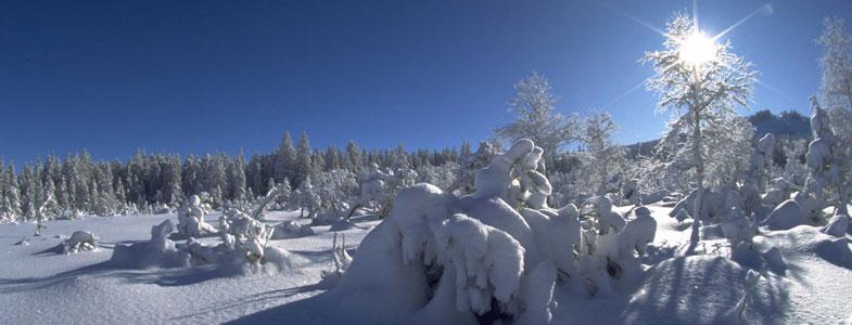 Winter ade Scheiden tut weh